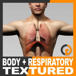 Human Male Body and Respiratory System Textured - Anatomy
