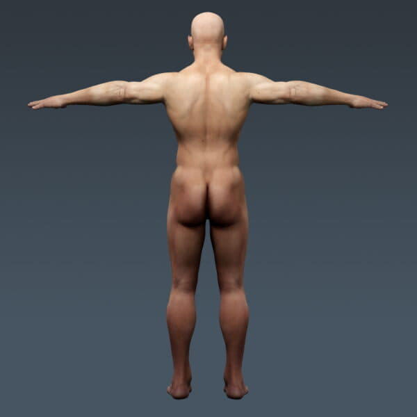 3698 Human Male Body and Respiratory System Textured Anatomy