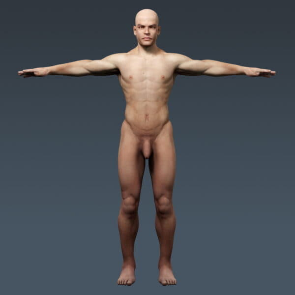 4043 Human Male Body and Digestive System Textured Anatomy